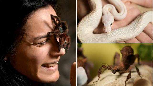 Iva (26): 'Jeftinije je uzdržavati zmije i tarantule nego mačke i pse, nemam straha od njih...'