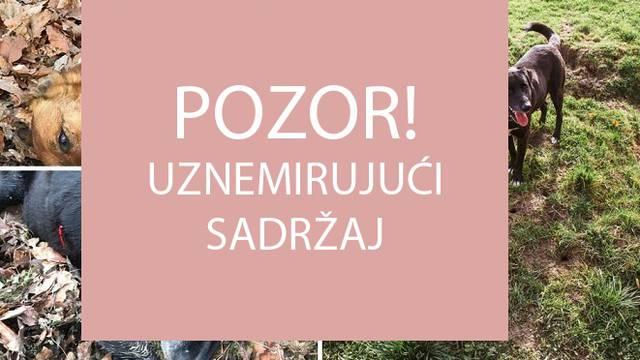 Užas kod Vrbovca: 'Našli smo naše pse, netko ih je ustrijelio'