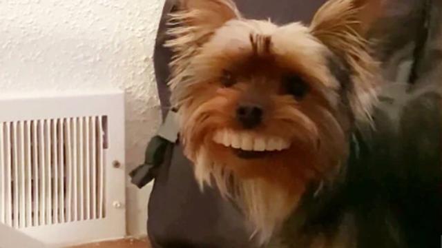 Pas ukrao vlasniku zube: 'Sve sam probudio tu noć smijehom'