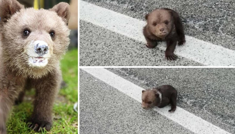 Omiljeni medvjedić Matija: 'Ne mislim da će natrag u prirodu'