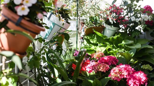 Svaka biljka na pravom mjestu: Bolivijske begonije vole sunce, a hoste sjenovite kutke balkona