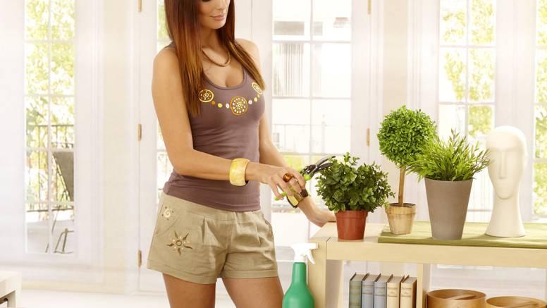 Biljke koje trebate držati u kući - da biste privukli sreću u dom