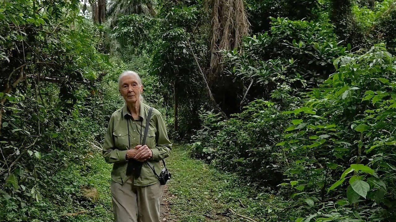 Jane Goodall planira posaditi pet milijuna stabala ove godine