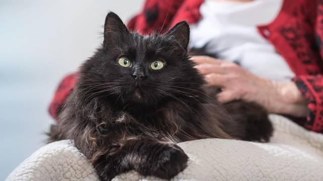 Mačka u kući pomaže da se bolje odmorite, zabavite, unosi mir i smanjuje rizik od alergija