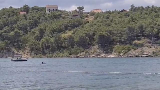 Dupine u igri snimili kod Zadra: 'Turisti su čak i plivali s njima'