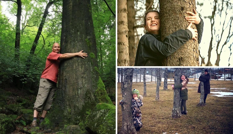 Upravitelji šuma na Islandu pozvali građane da grle stabla