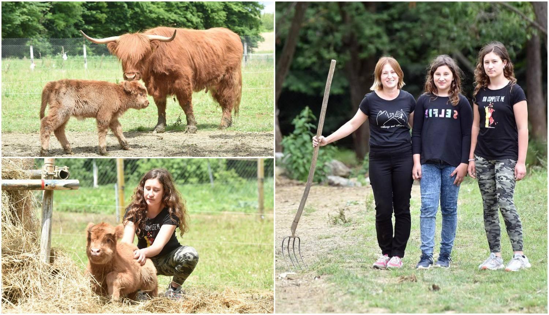 Učiteljica matematike: Naša škotska visinska goveda jedu sve trave, ali boje se groma