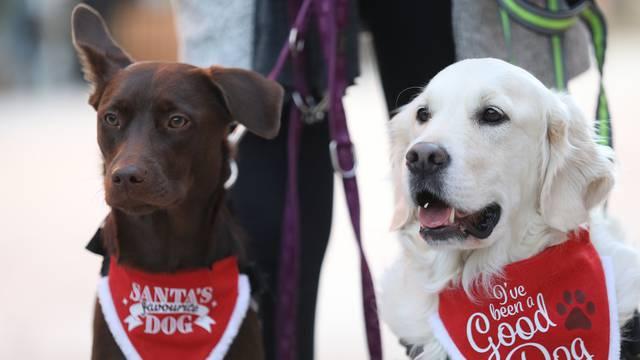 U Crikvenici održan Dog New Year's party, novogodišnji party za četveronožne ljubimce