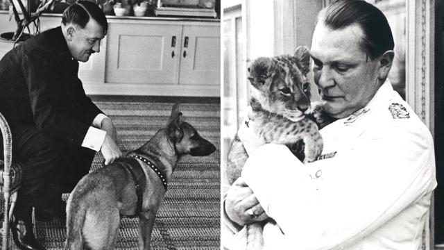 Obožavali su pse i lavove, ali mačke su mrzili. Nazivali su ih 'Židovima među životinjama'...