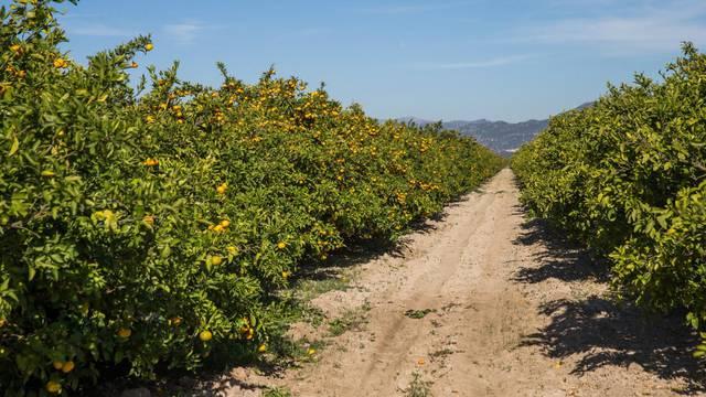 Ministarstvo: Počela je isplata potpora poljoprivrednicima zbog otežanog poslovanja