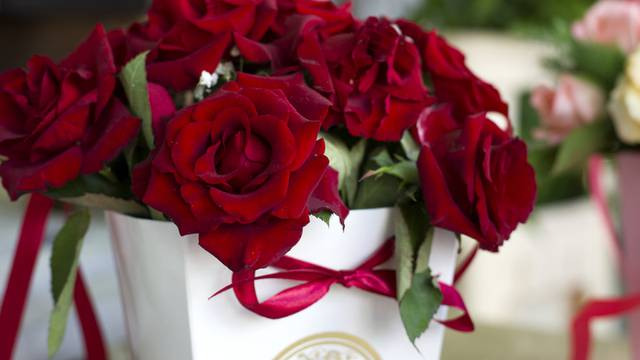 Bordeaux roses close-up. Bouquet of burgundy roses in a white gift box.