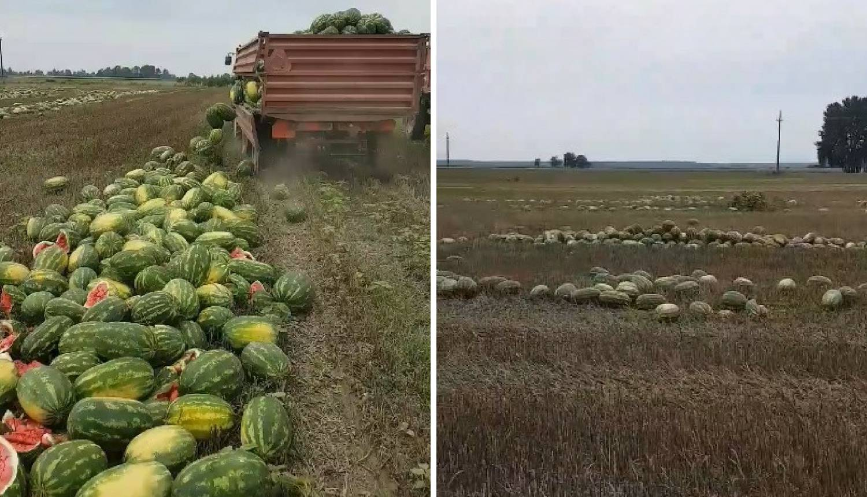 Morao baciti 25 tona lubenica: Želim ostati u Slavoniji, ali...