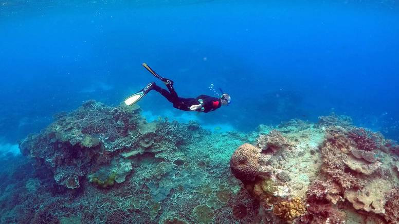 Probiotici mi mogli spasiti Veliki koraljni greben od izbjeljivanja