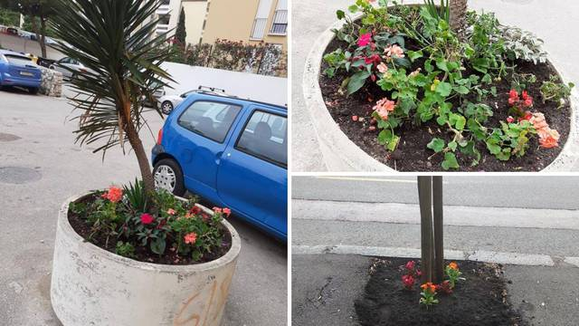 Podrška Zagrepčanima: Mini vrtovi niču u drugim gradovima