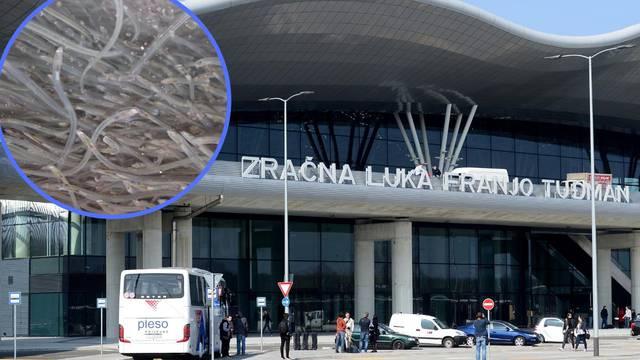 Koreanci su htjeli iz Hrvatske prošvercati  252 tisuće jegulja!