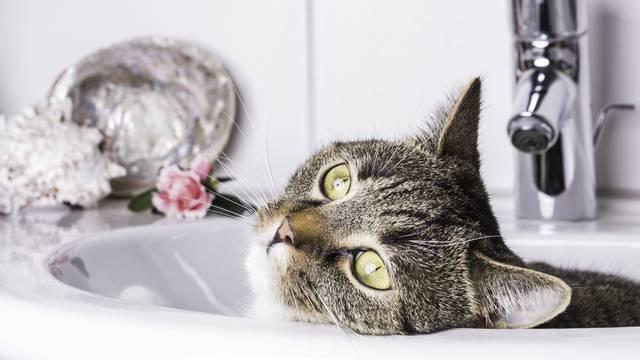 Mačka vam se voli izležavati u umivaoniku? Misterij je riješen