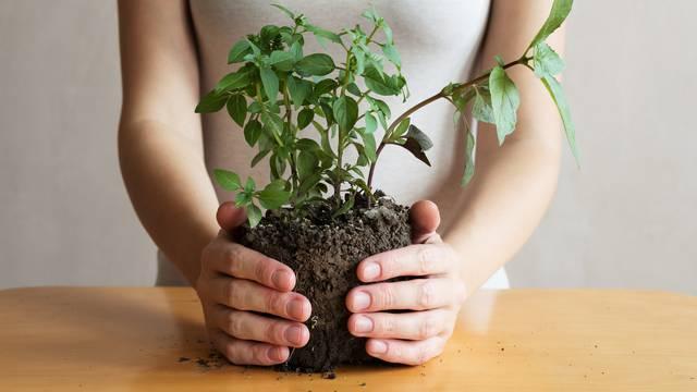 Riješite se nametnika s kućnih biljaka prirodno i učinkovito