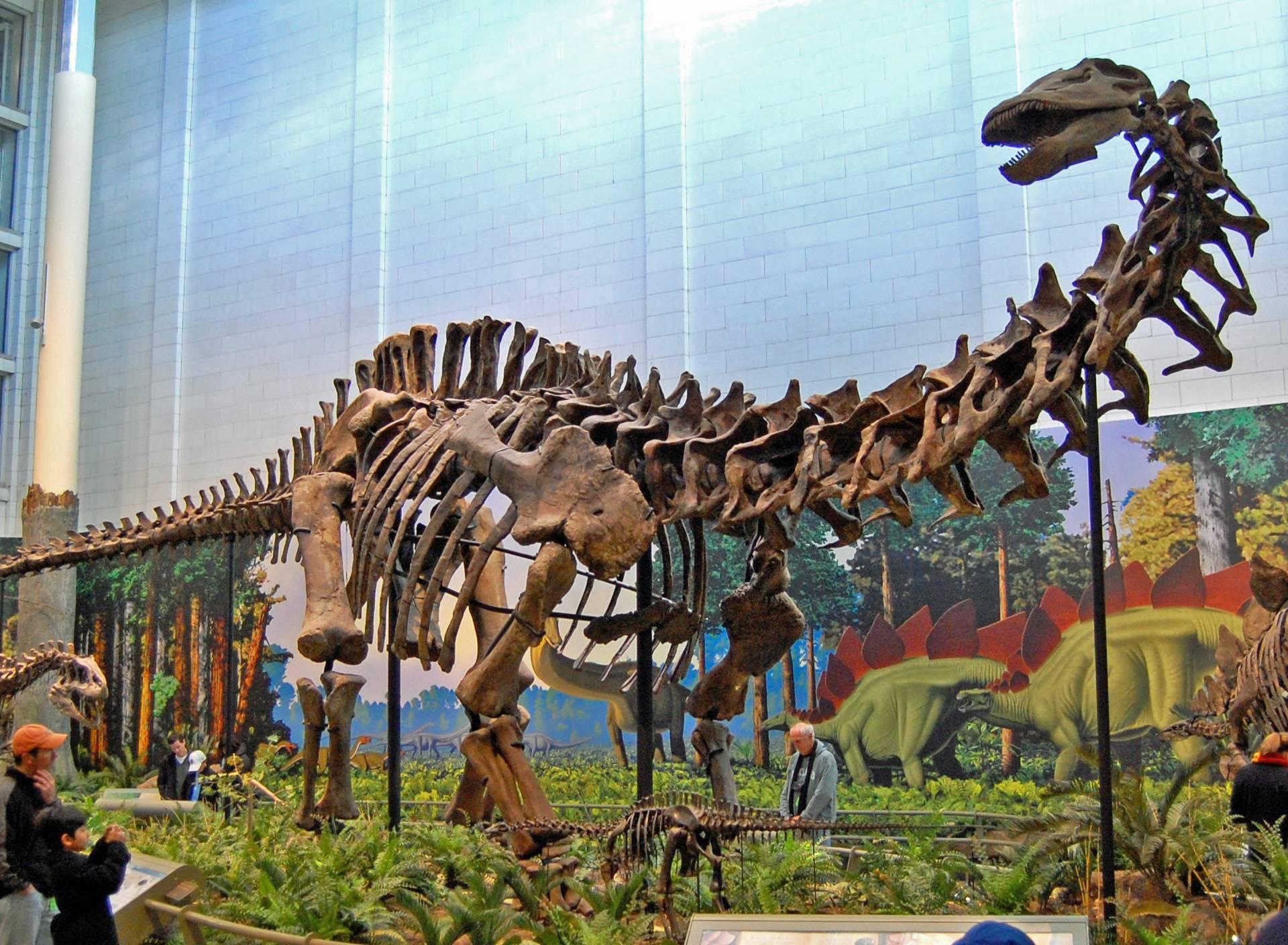 Bio je pravi gorostas: Otkrili potpuno novu vrstu dinosaura