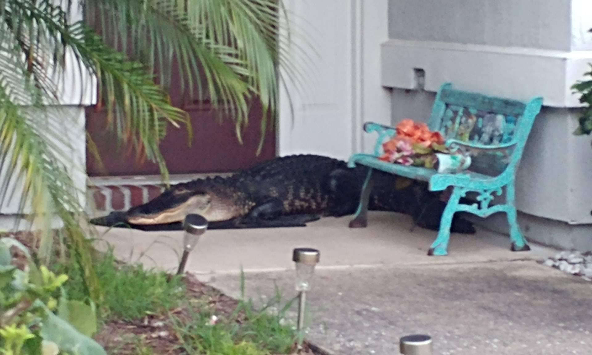 'Ono kad dođeš iz noćne i pred kućom ti spava veliki aligator!'