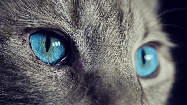 Infekcija: Mačka ga je ogrebala pa počeo misliti da je sin vraga