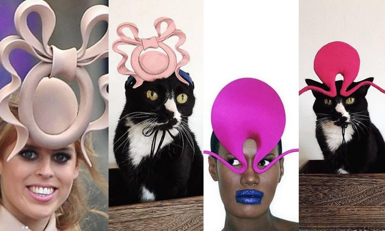 Žena rekreira slavne Philip Treacy šešire za svoju - mačku
