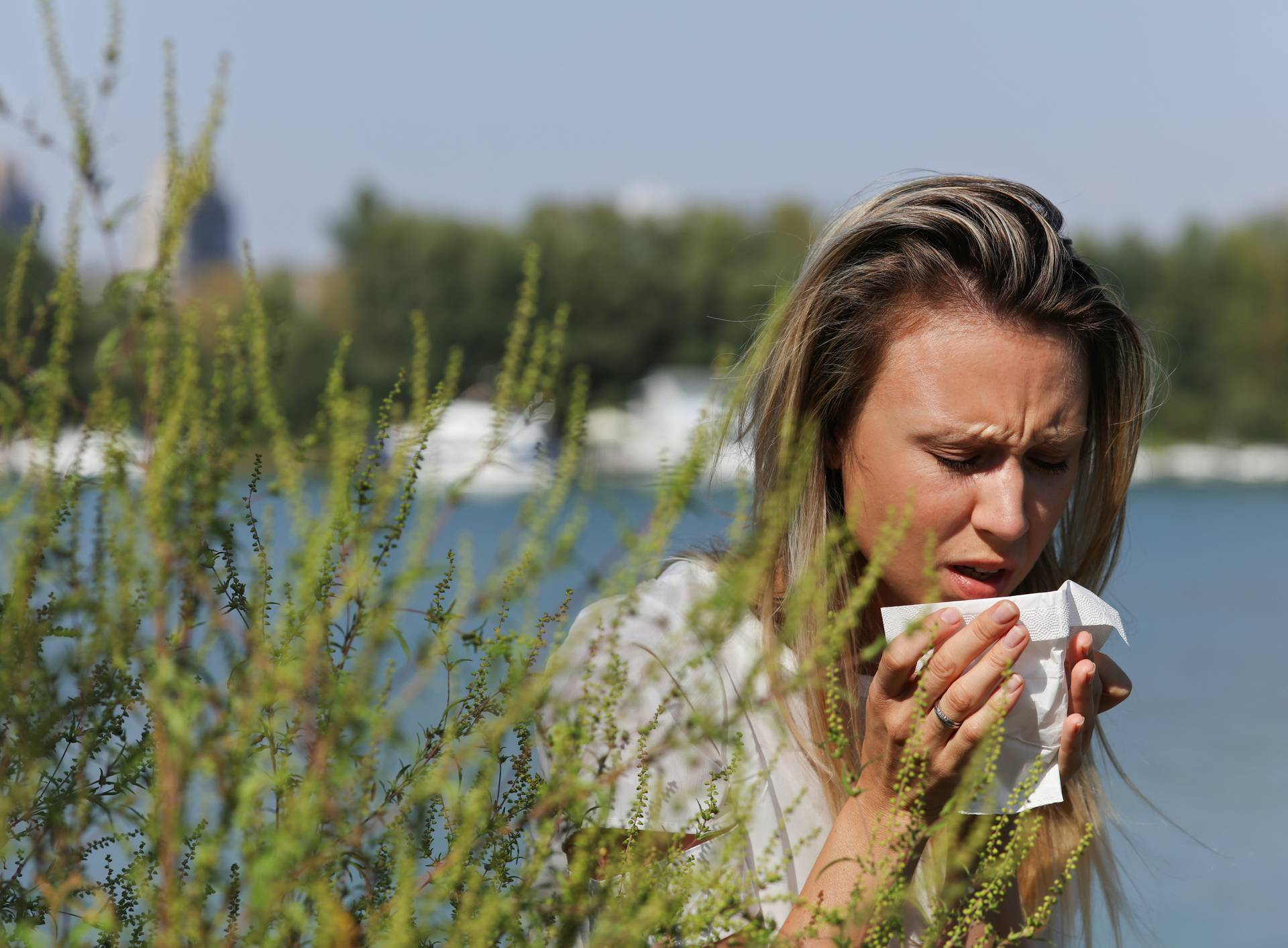 Pollen, Ragweed allergy, Woman sneezing in a tissue otdoors
