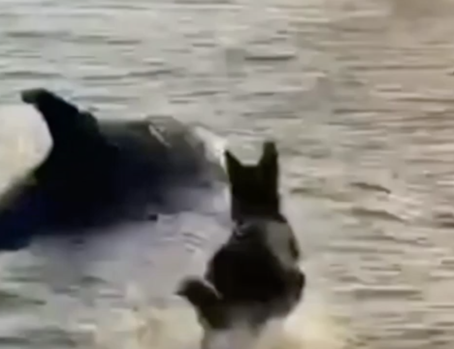 Zaigrani pas i dupin se sreli u plićaku i šokirali sve okupljene