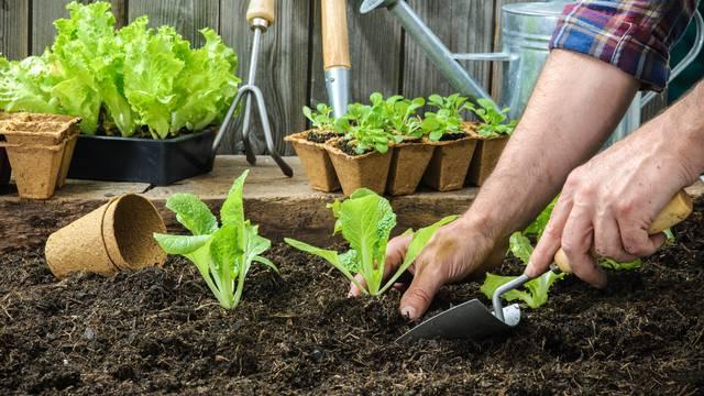 Sezonski radovi na balkonu i u vrtu: Pripremite bogat uzgoj...