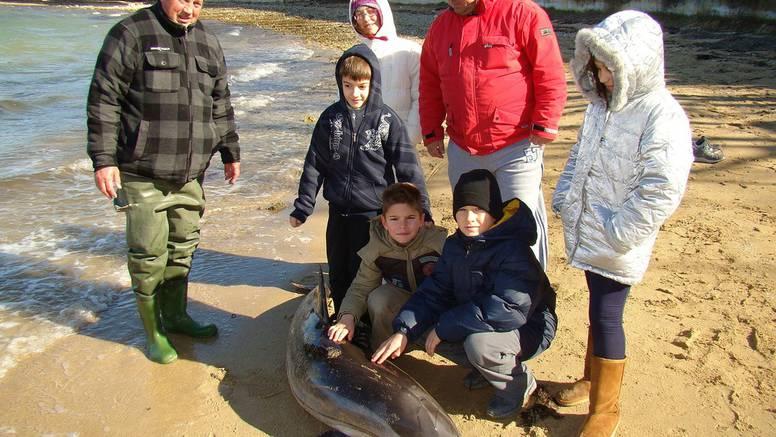 Pomor dupina: U dva tjedna sedam ih uginulo na Jadranu