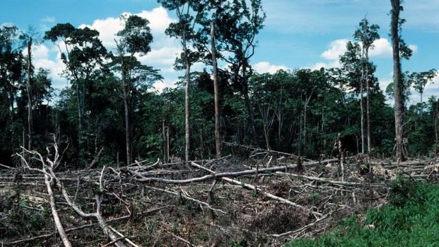 Logging deforestation, forest Amazona c..........
