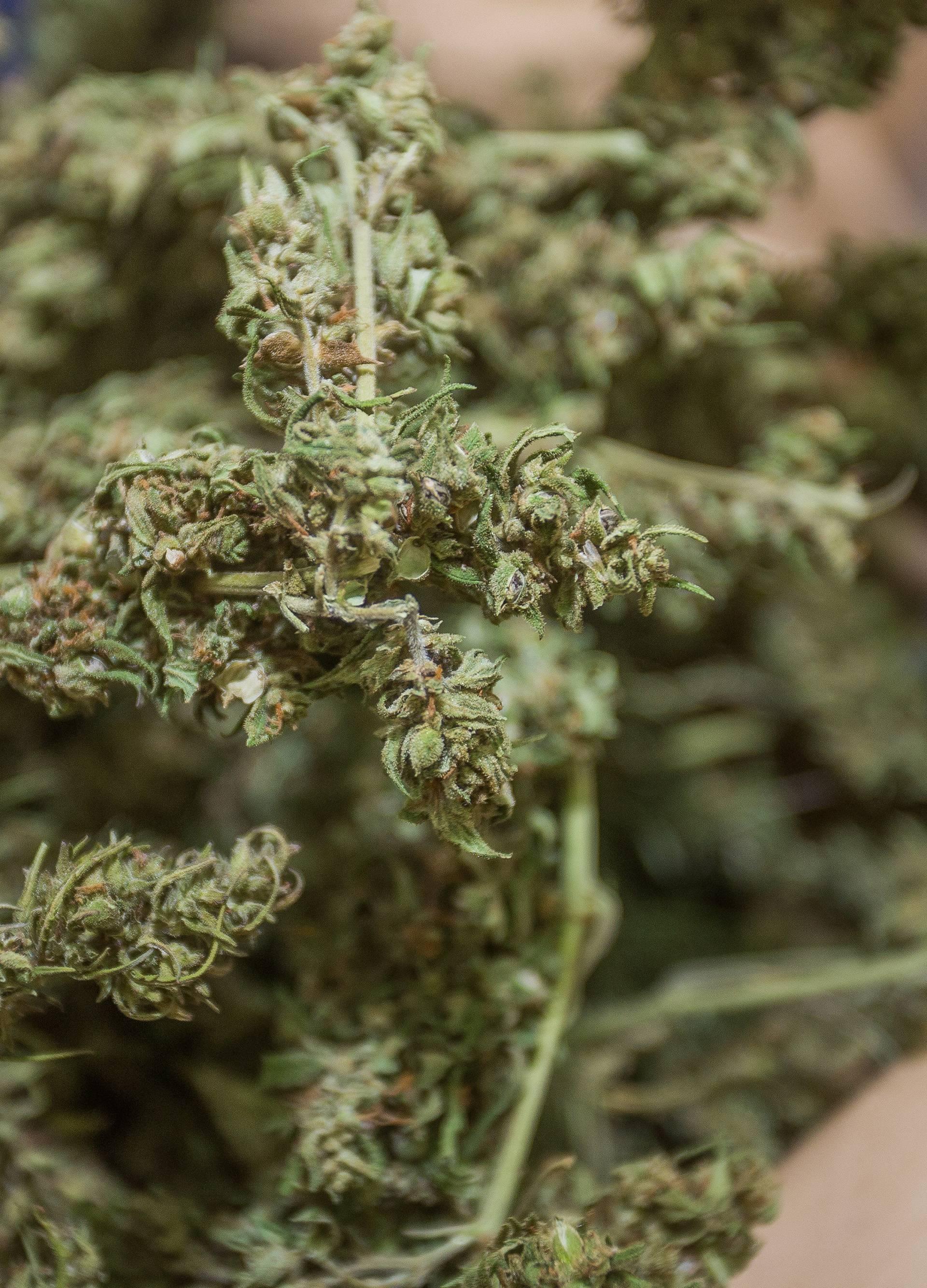 Nuštar: Kontrolirali propusnice pa pronašli kilogram marihuane