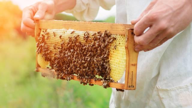 Ojačajte svoj imunitet: Evo za što je sve dobro koristiti med