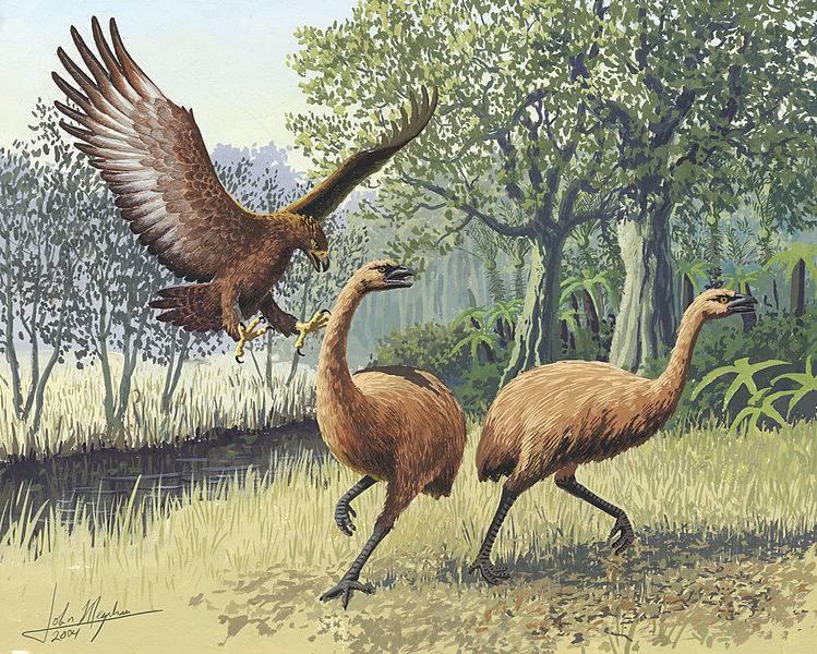 Znanstvenici su našli ostatke divovske prethistorijske ptice