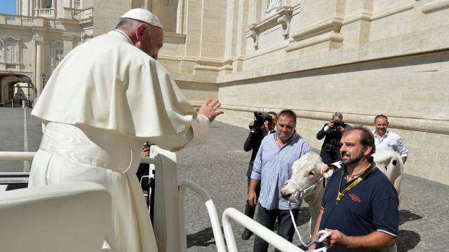 Pope Francis is presented with a cow before the general audience in Saint Peter's Square