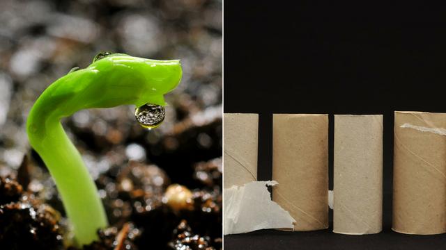 Ne bacajte role od WC papira - dobro će doći za presađivanje