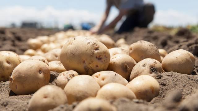 Prilika za izvoz: Naši novi aduti su mandarine, krumpir i parket