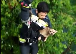 Hrabri Vatrogasci kod Rijeke spasili psića iz duboke provalije