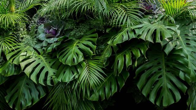 Raskošne tropske biljke koje rastu i u gradskim stanovima