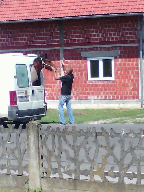 Brzo rješenje: Nije imao bolju ideju pa ubacio konja u kombi