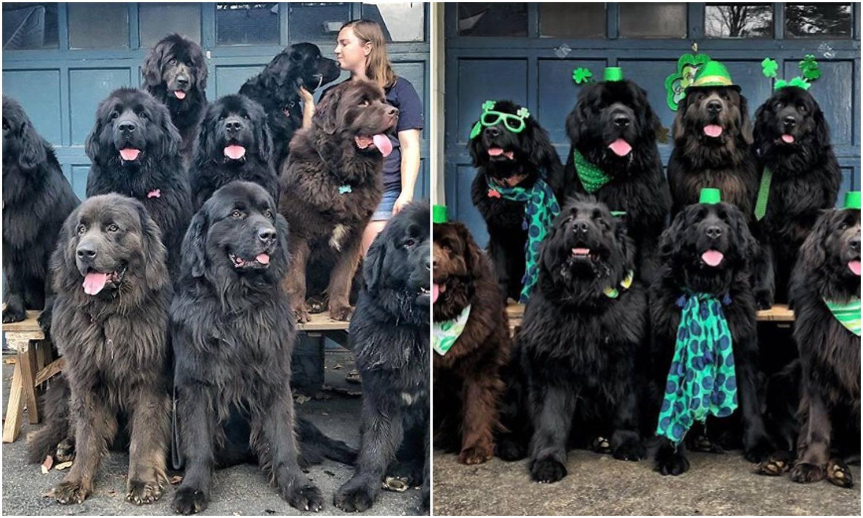 Sa svojih devet pasa posjećuje ljude u bolnici i uveseljava ih