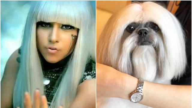 Psić postao zvijezda Instagrama jer sliči pjevačici Lady GaGi