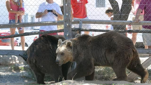 Medvjede koji su iza restorana Macola preselit će u Kuterevo