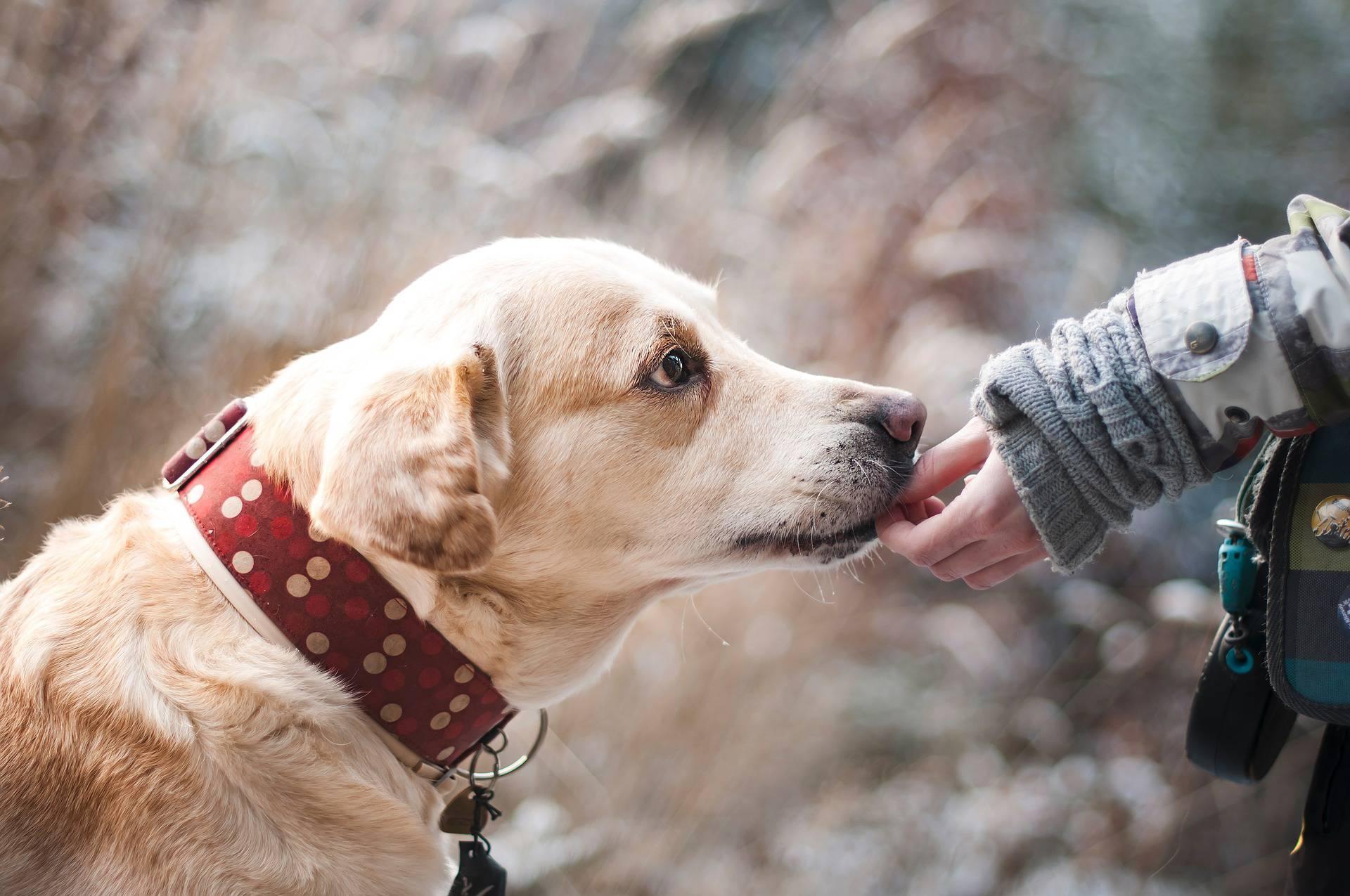 Kastrirati psa ili ne? Spriječit ćete mnoge bolesti i probleme