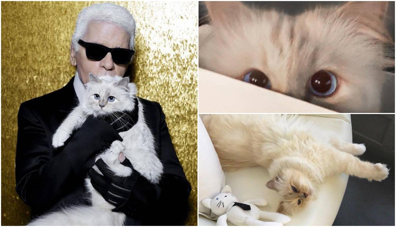 Ljubimica pokojnog Lagerfelda ima menadžera, radi i snimanja