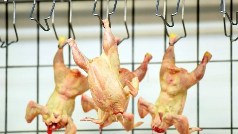 U piletini uvezenoj  iz Bosne i Hercegovine našli salmonelu