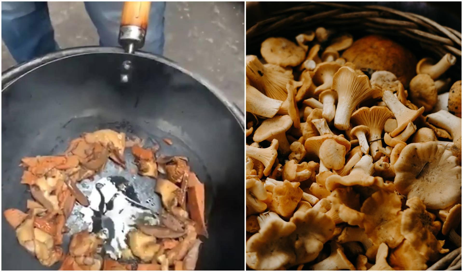 Trik za kuhanje gljiva
