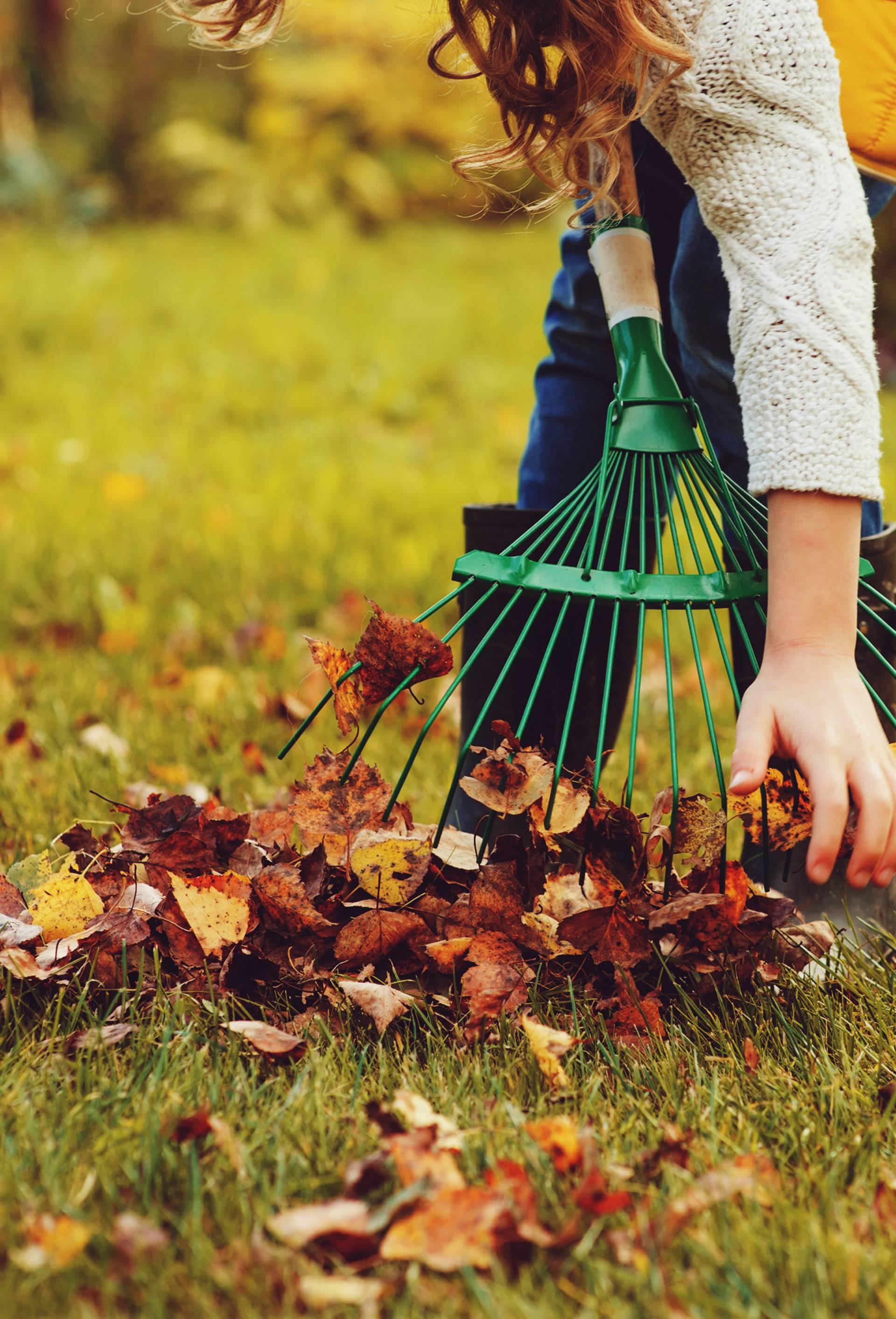 Lišće je bolje ne skupljati: Evo zašto je korisnije ostaviti ga