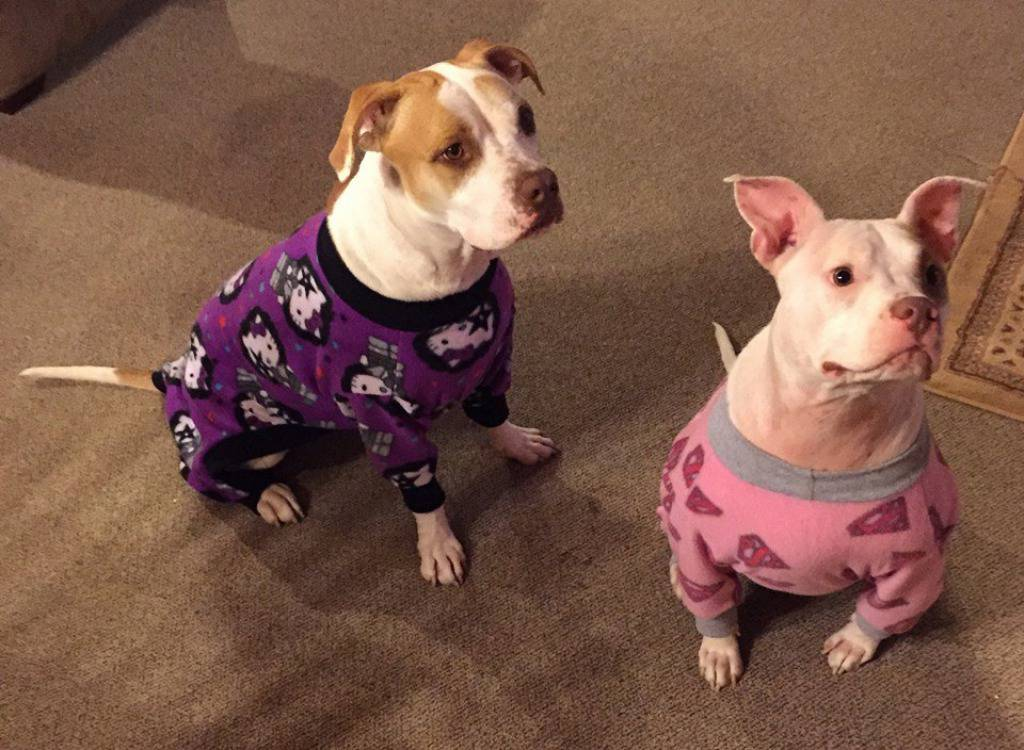 Pajamas for Pitbulls/Facebook