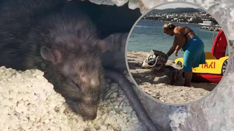 VIDEO Šok na plaži u Selcu: Štakor ugrizao ženu za nogu