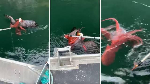 Hobotnica napala orla: 'Nismo bili sigurni što trebamo učiniti'
